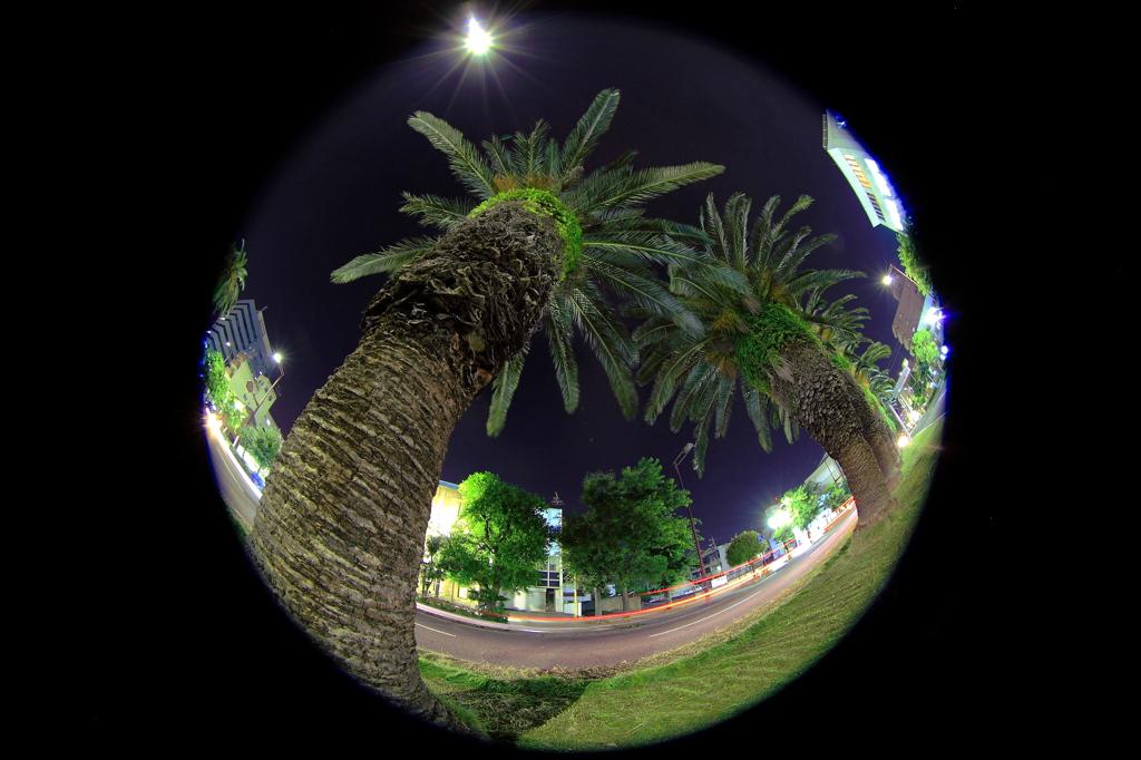 フェニックスの夜