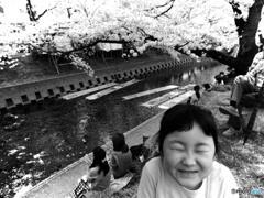 桜満開、笑顔も満開