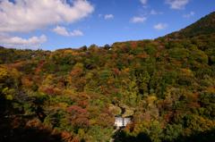 秋の色彩~箱根~