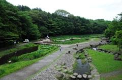 泉の森5_R