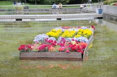 水面に浮かぶお花