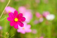 お花のお名前は?