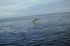 ハシナガイルカの群れ11