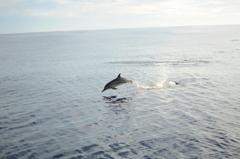 ハシナガイルカの群れ10