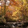 晩秋の渓流美