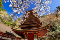 十三重塔と桜