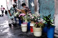 #14 路地裏の花売り