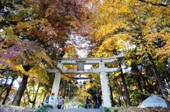 宝登の秋彩