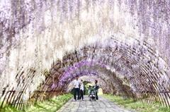 藤トンネル