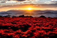 紅蓮の大地