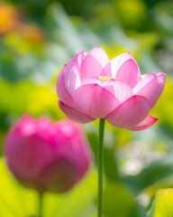 天に咲く華