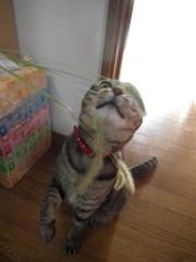 猫じゃらしの襲撃っっ