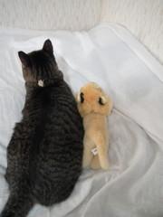 ネコ科の友達っ
