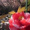 桜はあきらめてっ