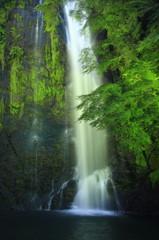 箕面の大滝 ライトアップ2
