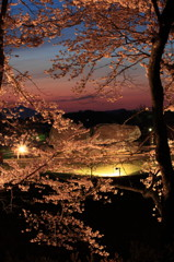 石舞台夕暮れ桜