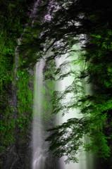 箕面の大滝 ライトアップ
