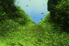 森を泳ぐ魚