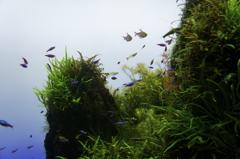 空に漂う魚