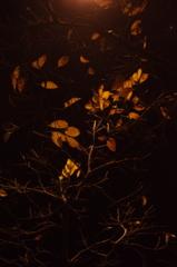 夜の明かり