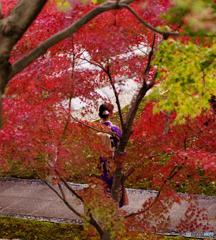 着物と紅葉