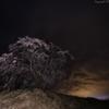 嵐に諍う樹