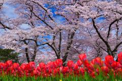 春のSymphony