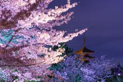 京都桜風景