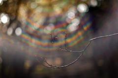 スペシウム光線