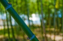 竹撮り物語_v7 ~spring bound~