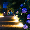 灯りと紫陽花