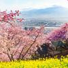春の華やかさ