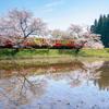 桜の咲く駅。