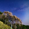 天の川と枝垂桜