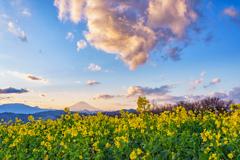 夕陽と黄色と富士山