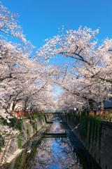 桜のトンネル飛行
