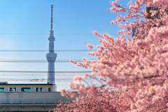 桜ツリー列車