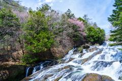 竜頭の滝と桜