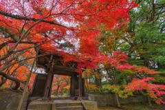 12月の秋
