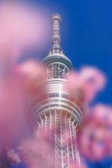 東京桜ツリー