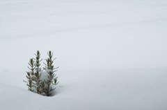 雪かきは苦手です(笑)