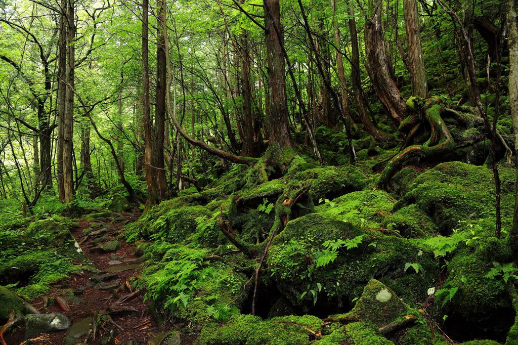 苔むす森 -蓼科大滝-