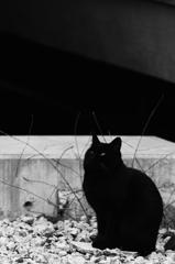 ネコ ~ギャラリー~