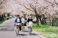 「桜色スマイル」