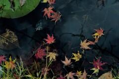 沈んだ落ち葉