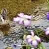 水辺の花見