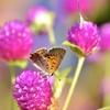 小さな蝶の楽園