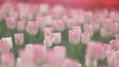 花便り - エレガントな立ち姿 -