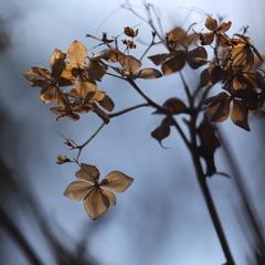 花便り - 追想 -