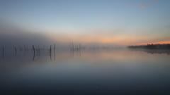印旛沼・朝景 - 朝霧の進出 -